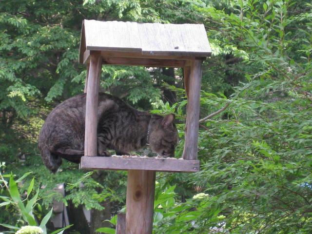 日本野鳥の会 : 餌台(バードフィーダー)の管理に …